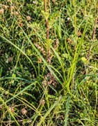 Herbicidas de primeras marcas al mejor precio del mercado nacional