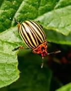 Cuidada selección de los mejores insecticidas al mejor precio