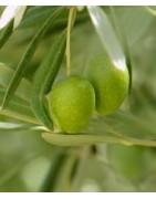 Fertilizantes Ecológicos I Compra productos certificados y autorizados para el cultivo ecológico