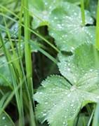 Plantas anuales - Malas Hierbas - Plaga