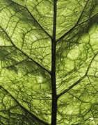 Comprar Aminoácidos para plantas - La Tienda del Agricultor®