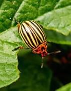Venta de Insecticidas Ecológicos - La Tienda del Agricultor®