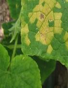Fungicidas Sistémicos para mildiu - La Tienda del Agricultor®