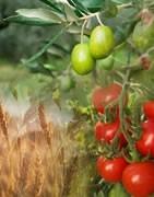 Cultivos agrícolas - Los mejores productos para su cultivo.