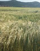 ≫Comprar herbicidas para cereal | La Tienda del Agricultor