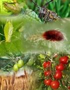 Cultivos y Plagas
