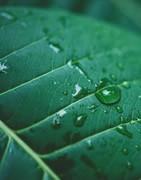 Nuevas Tecnologías Carbono - Venta Online