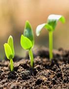 Abonos y fertilizantes mejoradores de suelo  - La Tienda del Agricultor✅