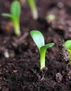 Micronutrientes - Correctores de Carencias | Tecnología MicroCarbono
