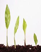 Abono Líquido Para Plantas |La Tienda del Agricultor®