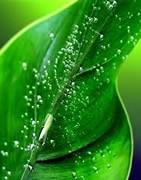 Comprar abonos y fertilizantes - La Tienda del Agricultor®