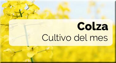 Cultivo del mes: Colza - Fertilizantes y Fitosanitarios