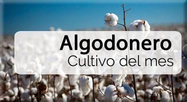 Cultivo del mes: Cereal - Fertilizantes y Fitosanitarios