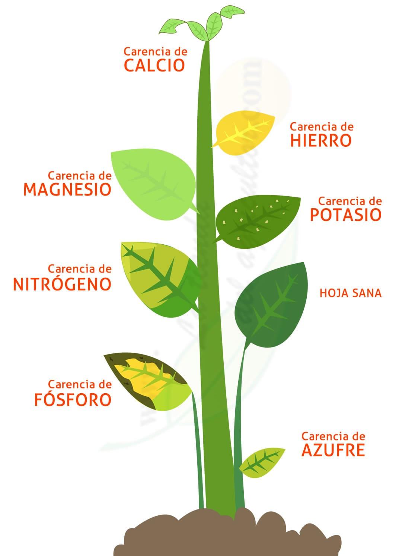 falta de nutrientes de la planta