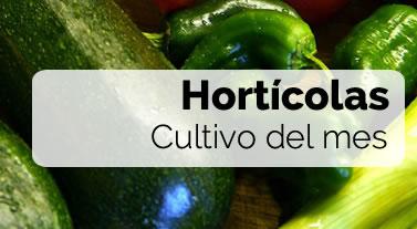 Cultivo del mes: Hortícolas