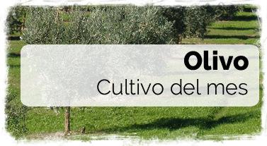 Cultivo del mes: Olivo - Fertilizantes y Fitosanitarios