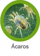 Plaga de ácaros
