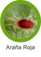 plaga de araña roja