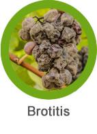 Plaga Botritis
