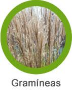 Mala hierba gramíneas