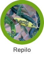 combatir repilo en olivo
